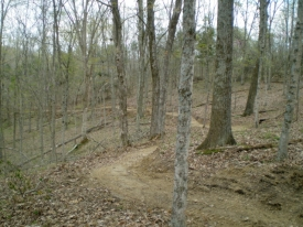 trail-winding-through-woods