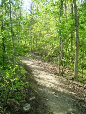 wooded-trail
